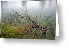 Branchs Over The Waters Edge 2001 Greeting Card