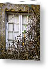 Branchy Window Greeting Card