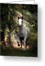 Breaking Dawn Gallop Greeting Card