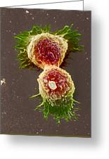 Breast Cancer Cells Greeting Card