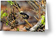 Breeding Bees Greeting Card