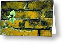 Brick Ivy Greeting Card