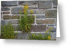 Brick Wall Flowers Greeting Card