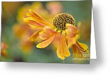 Bright And Breezy  Greeting Card by Jacky Parker