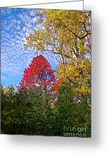Bright Autumn Color Greeting Card