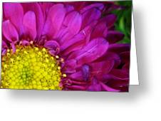 'bright Beauty' Greeting Card by Tanya Jacobson-Smith