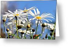 Bright Daisies Greeting Card