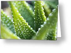 Bright Green Succulent Greeting Card
