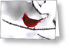 Bright In The Snow - Cardinal Greeting Card