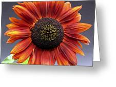 Bright Intense Sunflower Greeting Card