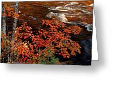 Bright Leaves At Swift River Greeting Card