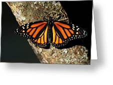 Bright Orange Monarch Butterfly Greeting Card