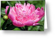 Bright Pink Peony Greeting Card
