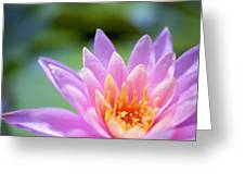 Bright Pink Water Lily II Greeting Card