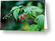Bright Red Berries Greeting Card
