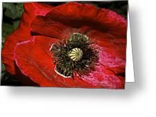Bright Red Poppy Greeting Card
