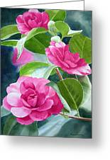 Bright Rose-colored Camellias Greeting Card by Sharon Freeman