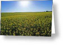 Bright Sun And Bloom Stage Mustard Greeting Card