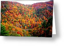Brilliant Color Trees Greeting Card