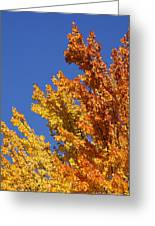 Brilliant Fall Color And Deep Blue Sky Greeting Card