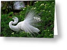 Brilliant Feathers Greeting Card