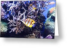 Brilliant Fish Aquarium Greeting Card