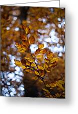 Brilliant Leaves Greeting Card