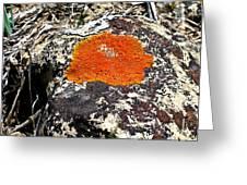 Brilliant Orange Lichen Greeting Card