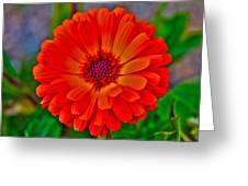 Brilliant Orange No. 2 Greeting Card