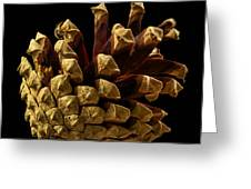 Close Up Of Pinecone Greeting Card
