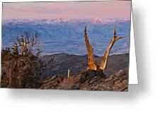 Bristlecone Bishop Sunrise Greeting Card