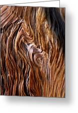 Bristlecone Pine Grain Greeting Card