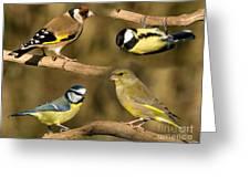 British Garden Birds Greeting Card