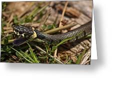 British Grass Snake Greeting Card