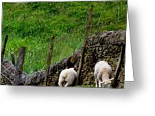 British Lamb Greeting Card