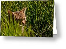 British Wild Cat Greeting Card