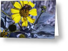 Brittlebush Bee Greeting Card