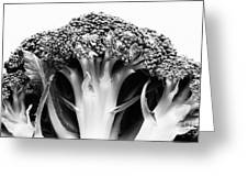 Broccoli On White Background Greeting Card by Gaspar Avila