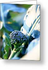 Broccoli Sprout Greeting Card