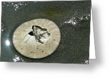 Broken Sand Dollar Greeting Card by Lori Seaman