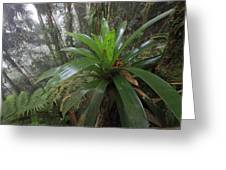 Bromeliad And Tree Ferns Colombia Greeting Card