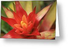 Bromeliad Greeting Card by Sharon Mau