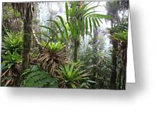 Bromeliads And Tree Ferns  Greeting Card by Cyril Ruoso