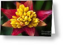 Bromiliad Blossom Greeting Card