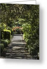 Brookgreen Gardens Path Greeting Card