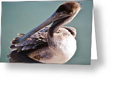 Browm Pelican Up Close Greeting Card