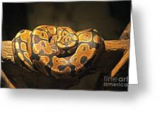 Brown And Black Snake Greeting Card