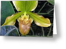 Brown And Green Orchid Amid Leaves Greeting Card