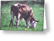 Brown And White Cow Eating Grass Greeting Card