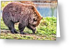 Brown Bear 201 Greeting Card